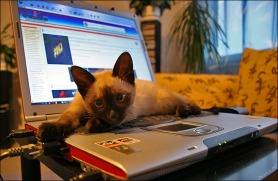 cat on computer staring at you