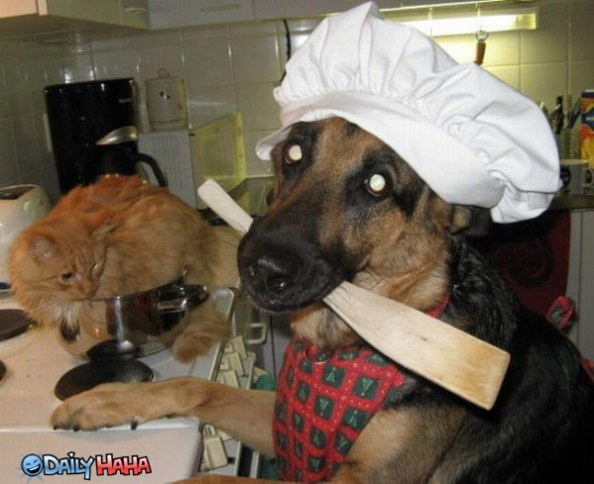 dog cooking a cat